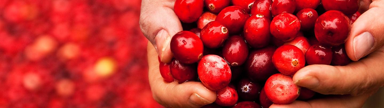 Getrockenete Cranberries von Ocean Spray