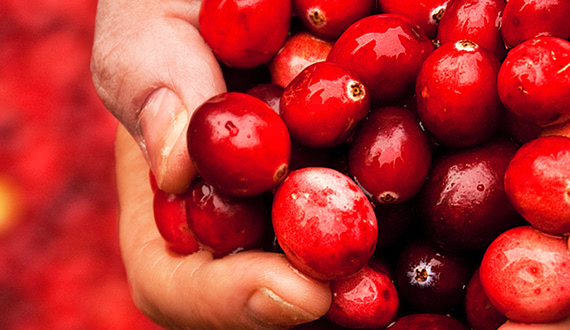 A Snack Star is Born: Cranberries with Less Sugar
