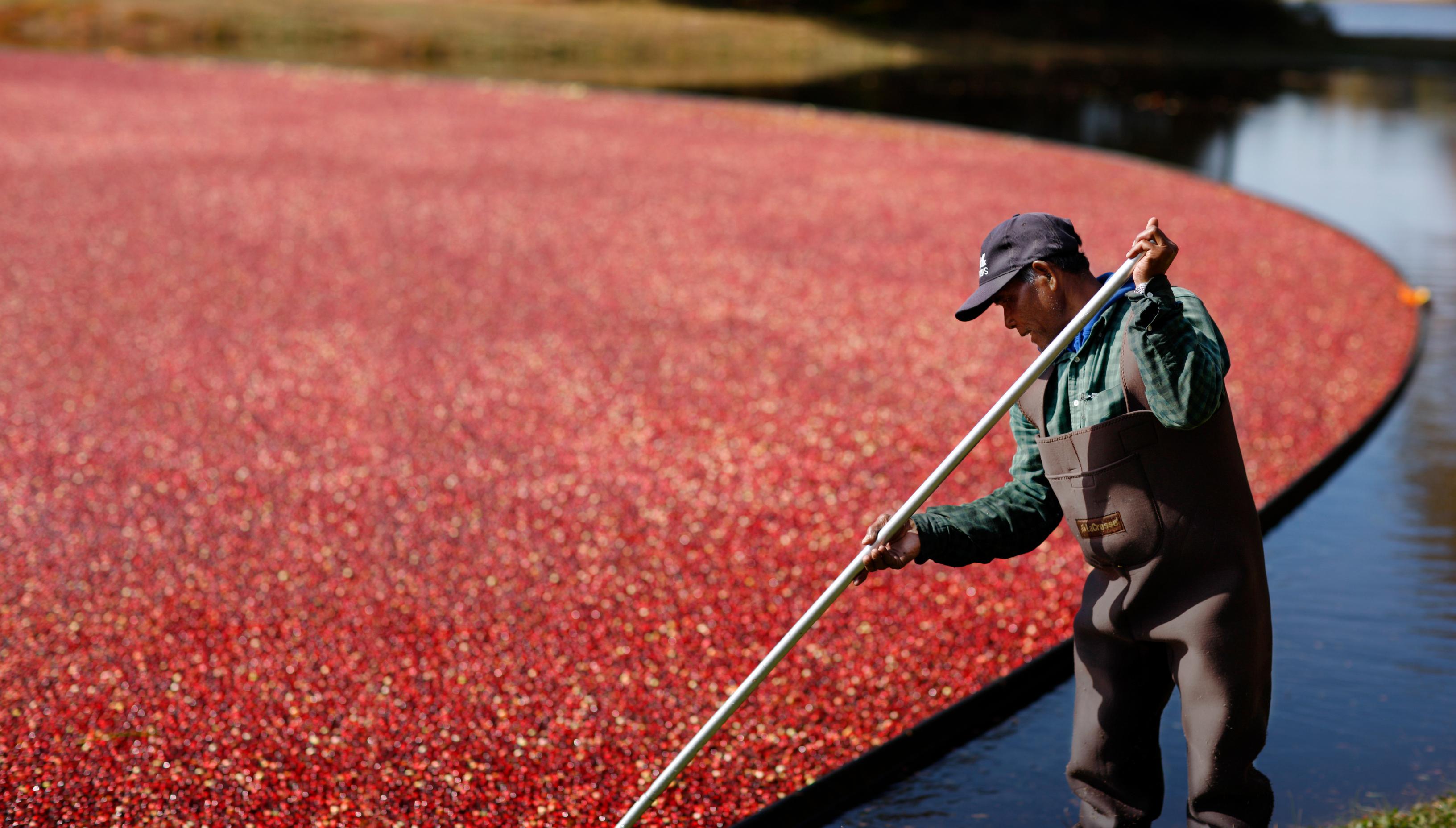 Cranberrys von Ocean Spray – jetzt auch aus Kanada
