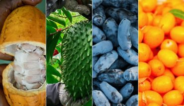 Cacaofruit, Guanábana, Haskap & Sea Buckthorn